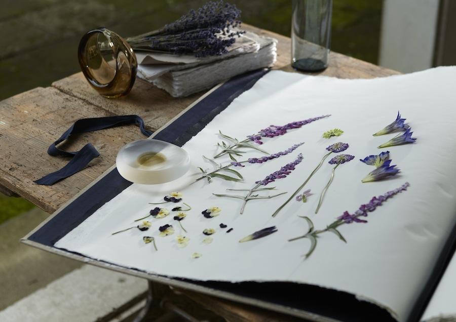 cat06-lavender